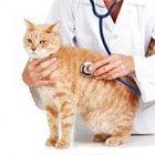 Ветеринария кошки